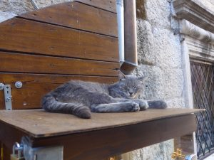Grey stray cat sleeping