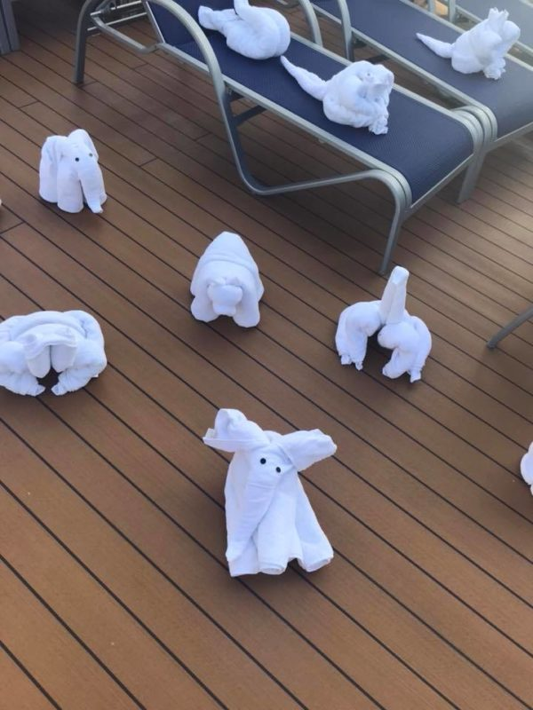 towel animal takeover of Lido